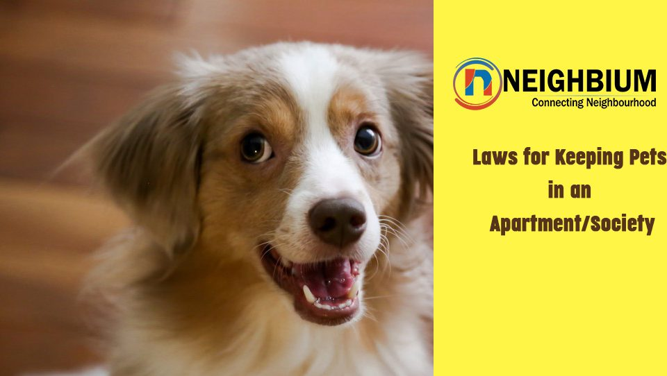 Laws for Keeping Pets in an Apartment or in Society